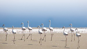 Walvis Bay Town Attractions