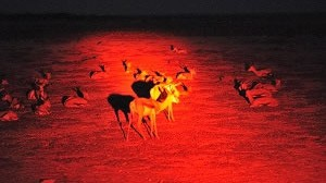Etosha at Night