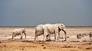 A new season in Etosha