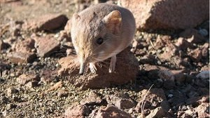 New species discovered in Namibia