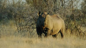 Rhino Tracking Suspended at Uukwaluudhi Lodge